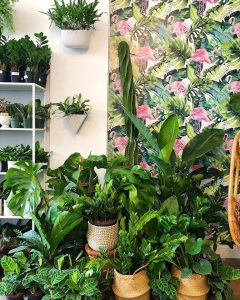 Lunch and Learn: Houseplants 101 on Wednesday, August 12th