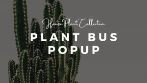 Expand your houseplant collection with a Plant Swap!
