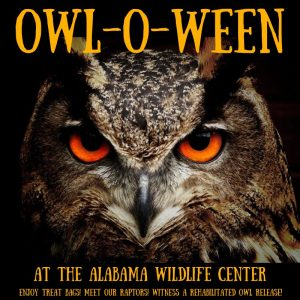 It's Owl-O-Ween at the Alabama Wildlife Center this Saturday!