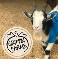 Griffin Farms Pumpkin Patch open or fun family agritainment